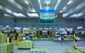 تبوك الزراعية: انخفاض الخسائر المتراكمة إلى 15.1% من رأس المال
